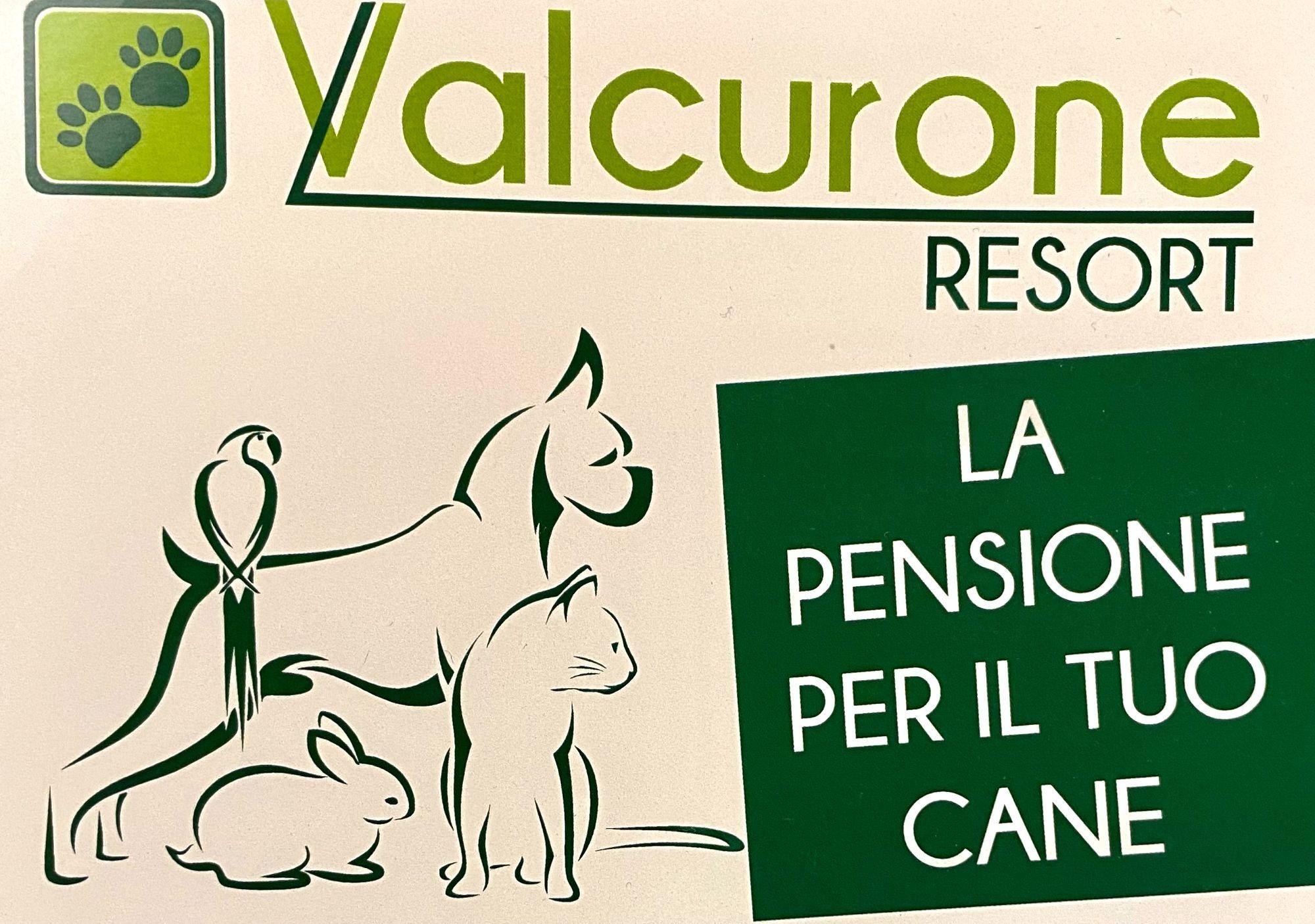 La pensione perfetta per il tuo cane